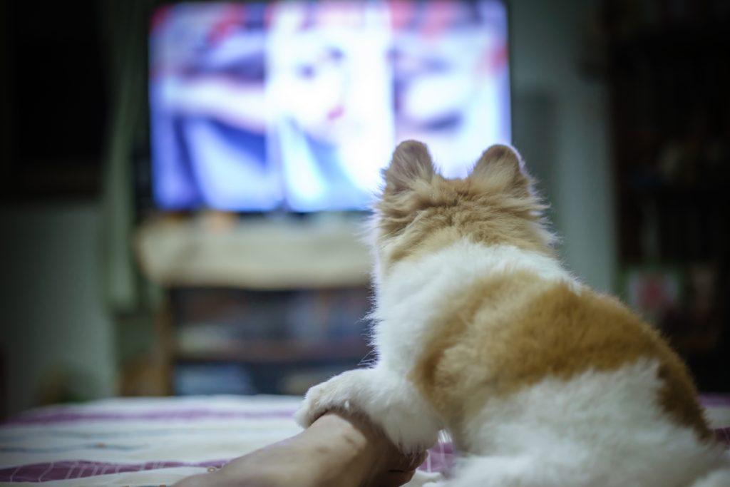 pas gleda televizor