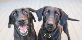 ponasanje pasa