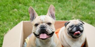 najpopularnije rase pasa