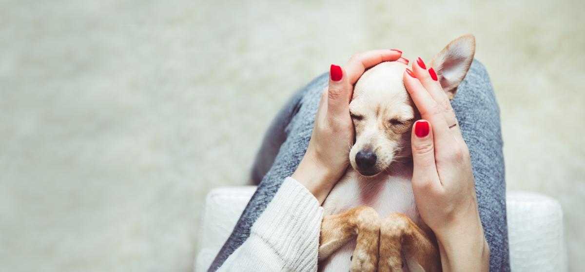 zene i psi