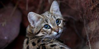 najsmrtonosnija mačka na svetu