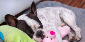 pas spava sa igrackom