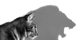 macke i lavovi