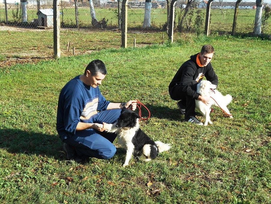 azil za pse u Sremskoj Mitrovici