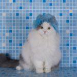 higijena macaka