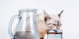 macka i voda