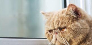 usamljena macka