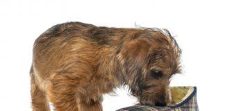 psi vole neprijatne mirise