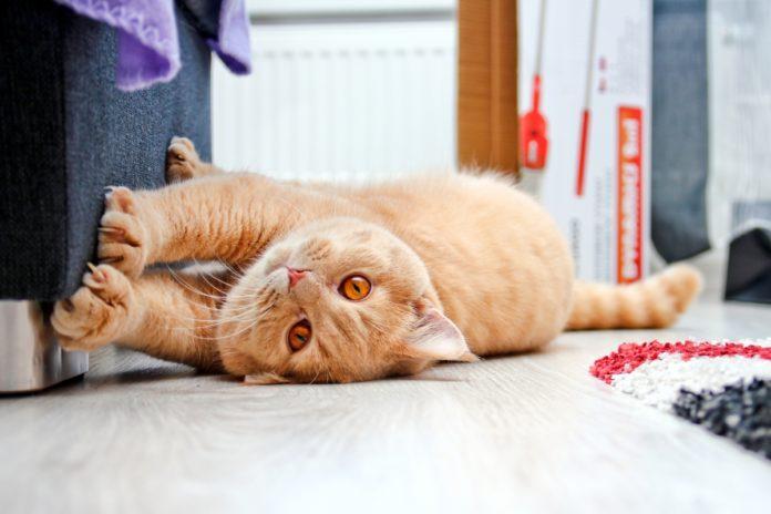 macka i istezanje
