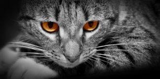 strah od macaka