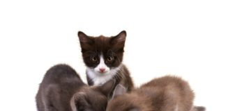 ishrana macica