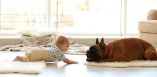 pas i beba