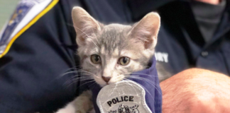 macka policajac