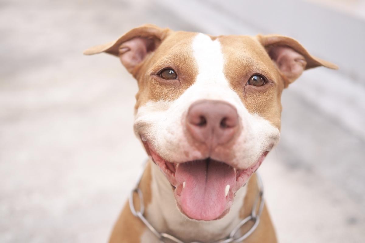 Pasa sajt borbe Ubijeni psi
