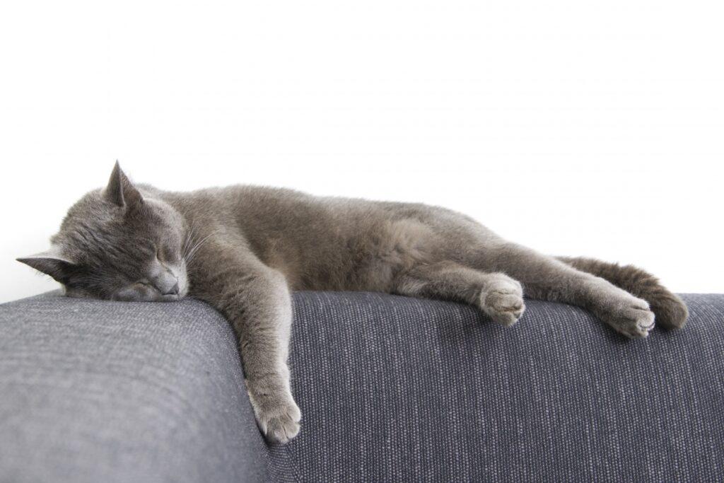 depresivna macka spava