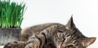 depresija kod macaka