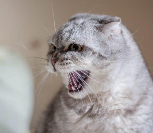 ljuta macka, agresija