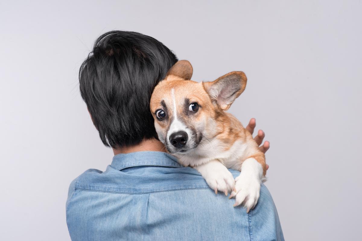 grliti psa, zagrljaj