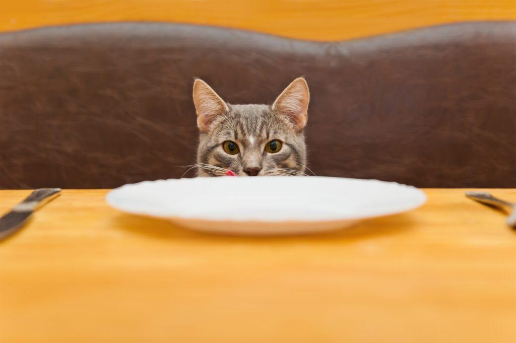 macka jede