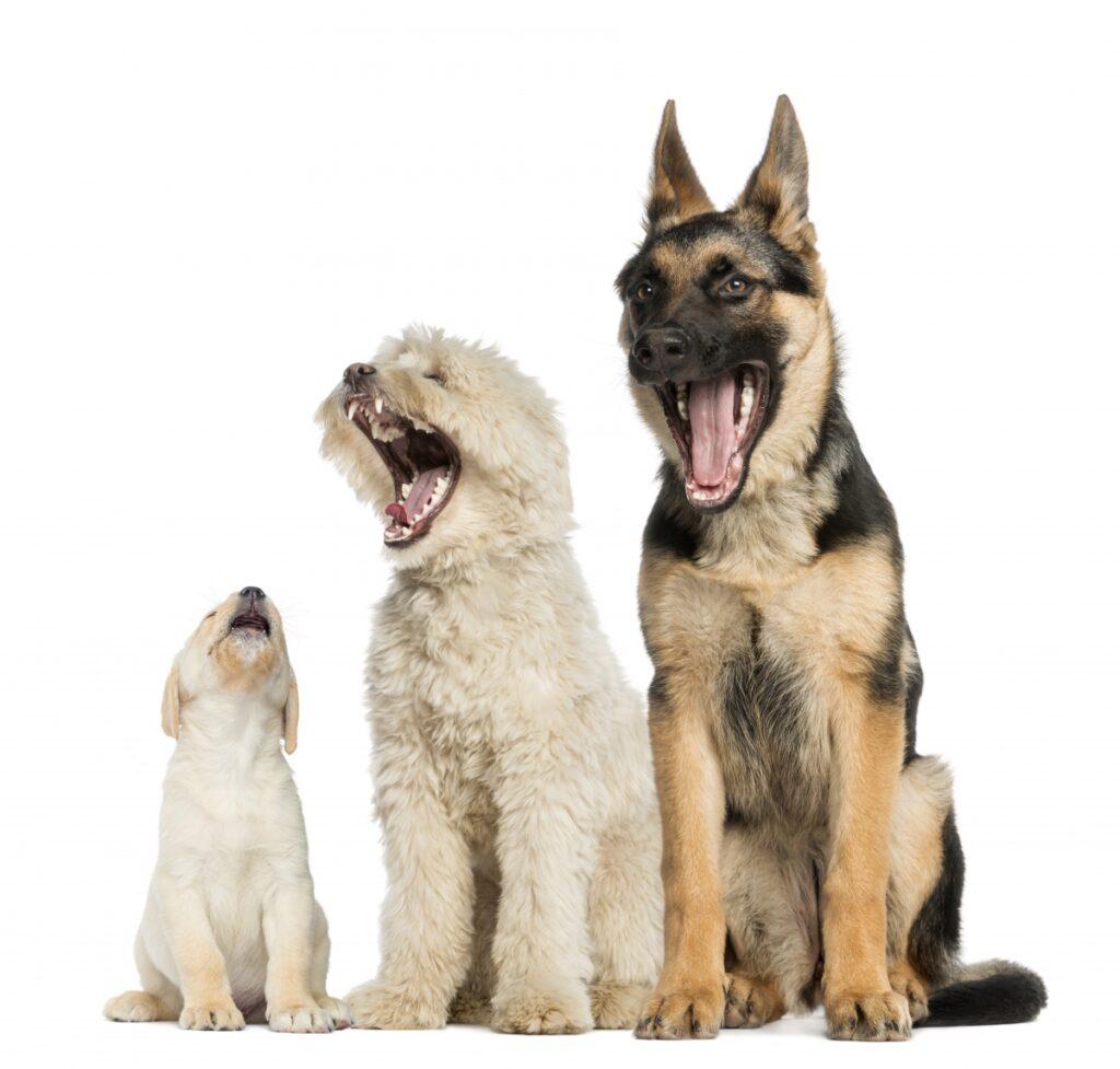 psi drugari