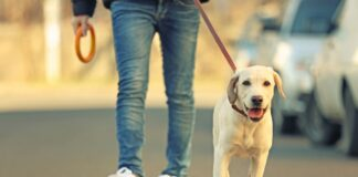 pas i vlasnik