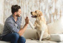 srecan pas, pas i vlasnik