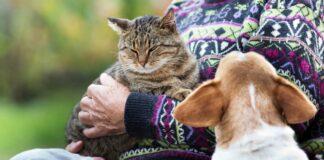 macka, pas i vlasnik