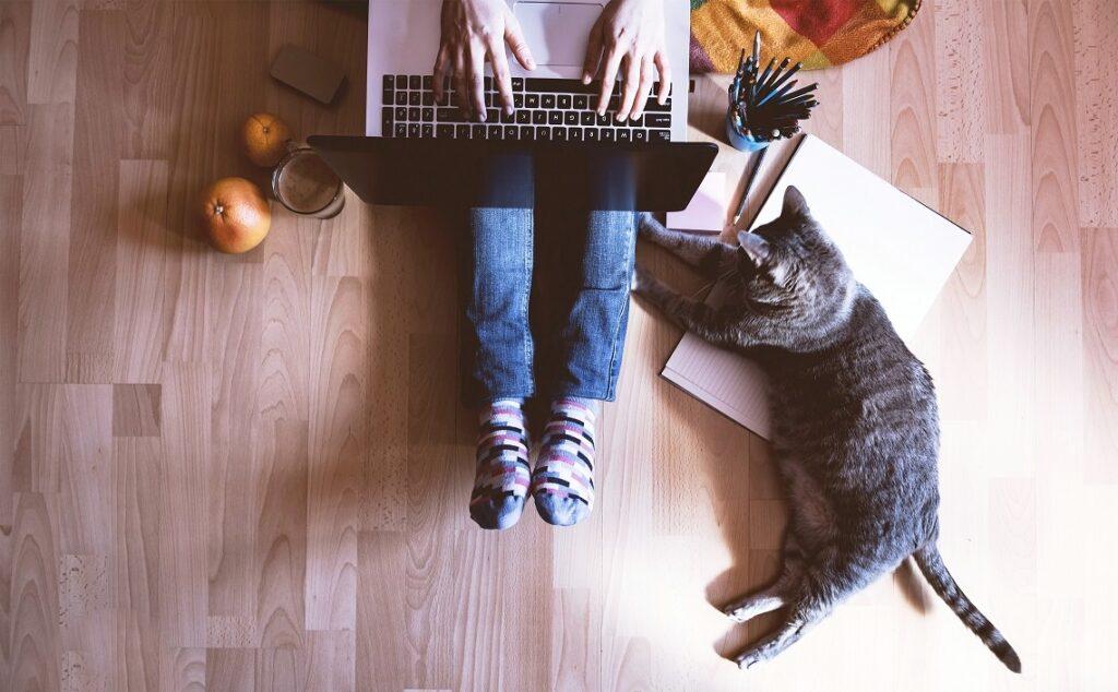 macka i vlasnik