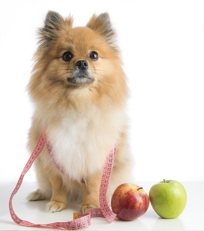 zdrava ishrana psa