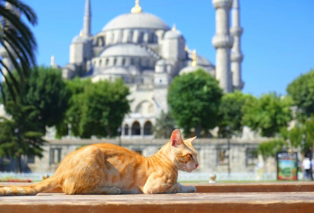 macka istanbul