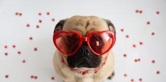 pas ljubav