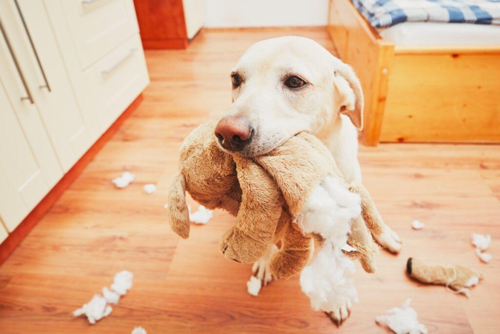 pas sa igrackom