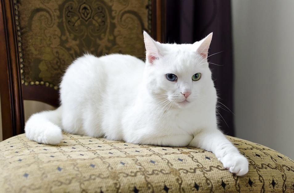 ruska bela macka
