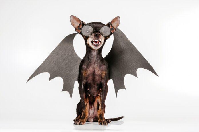 sindrom malog psa