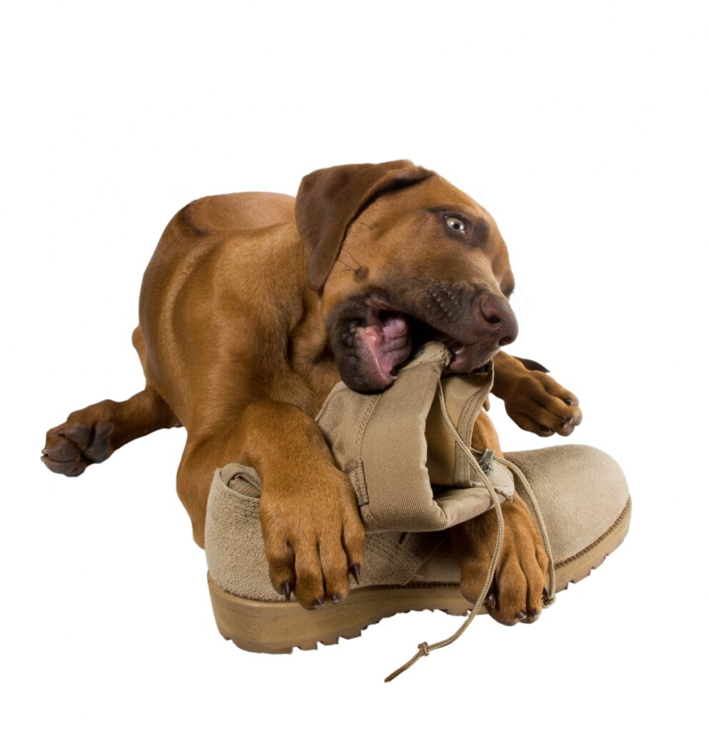 pas i cipela