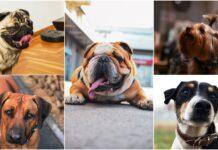 instagram psi srbija
