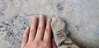 ruka i sapa