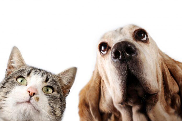 pas i macka