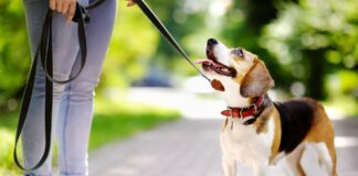 pas u setnji
