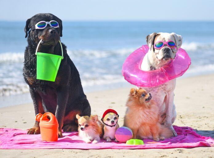 psi na plazi