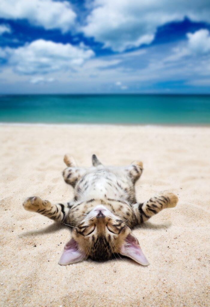 macka na plazi