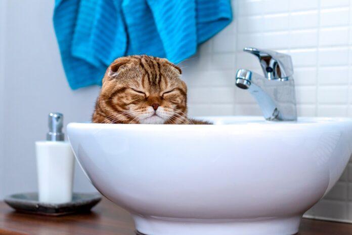 macka u lavabou