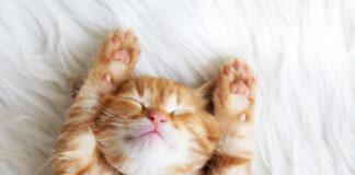 mace spava