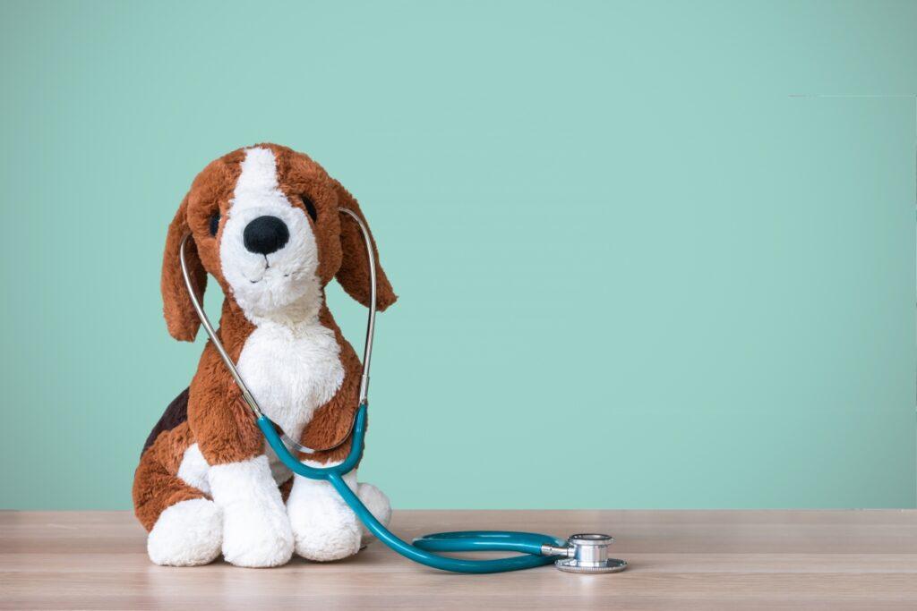 zdravlje pasa