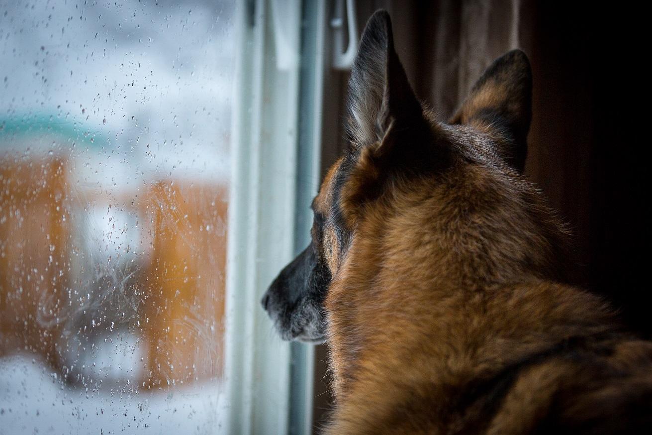 pas gleda kroz prozor