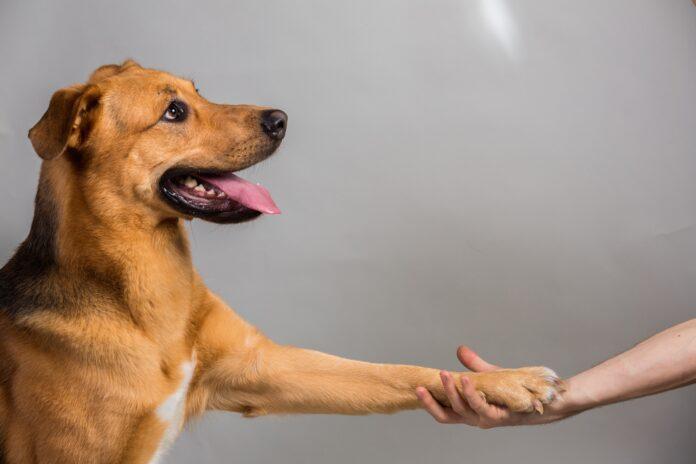 kako prici psu