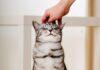 mazenje macke