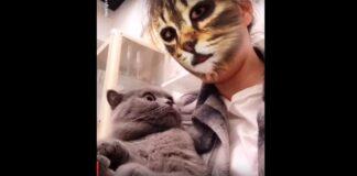 cat face filter
