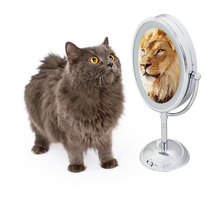 macka i lav