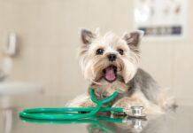 pas veterinar
